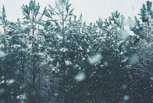 023-christmas-goodies-tree