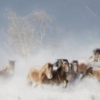 Great Atmosphere – Horses
