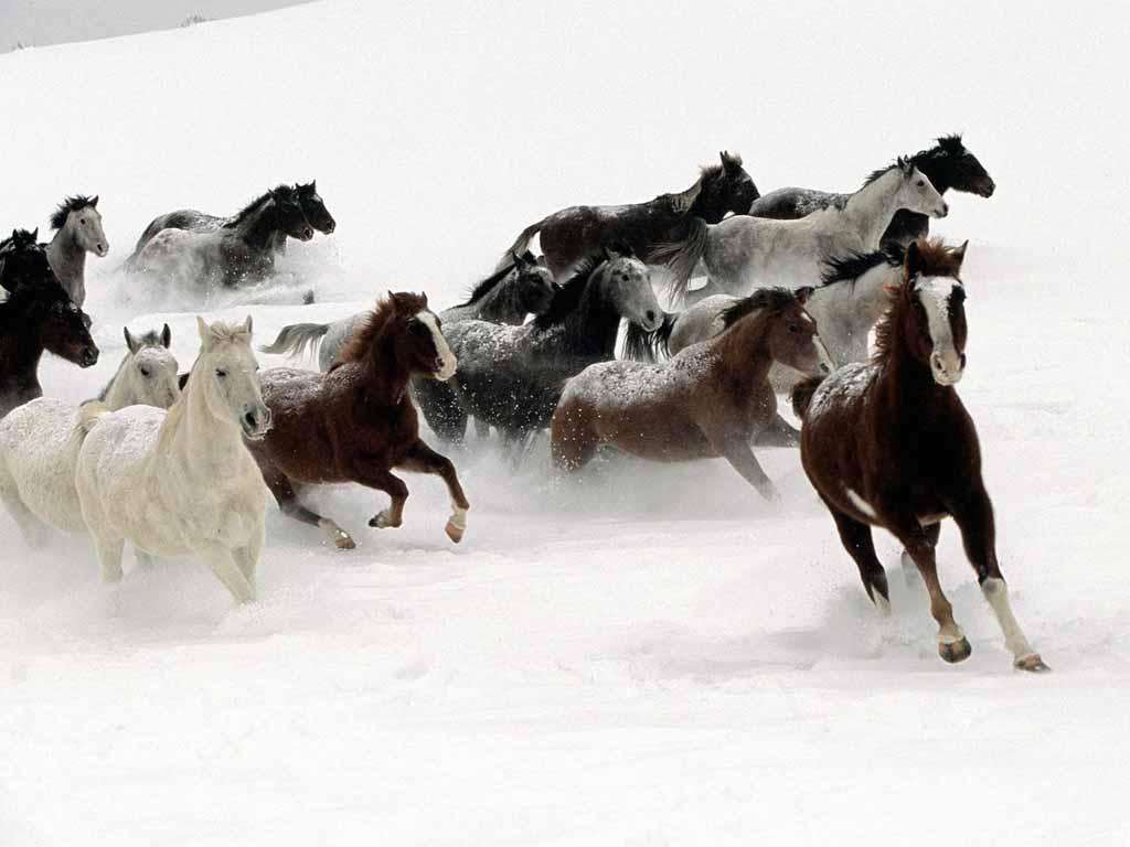 Popular Wallpaper Horse Winter - 112-great-atmosphere-horses-snow-winter  Pic_964926.jpg