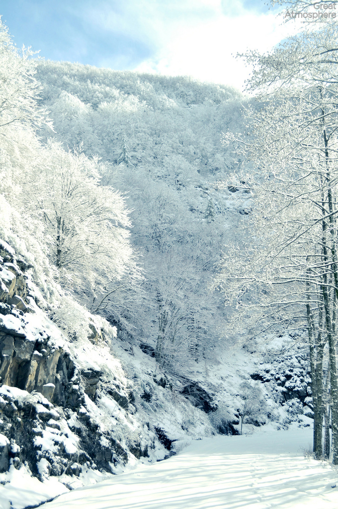 Cold-Winter-Morning-full-of-white-great-atmosphere-165-1