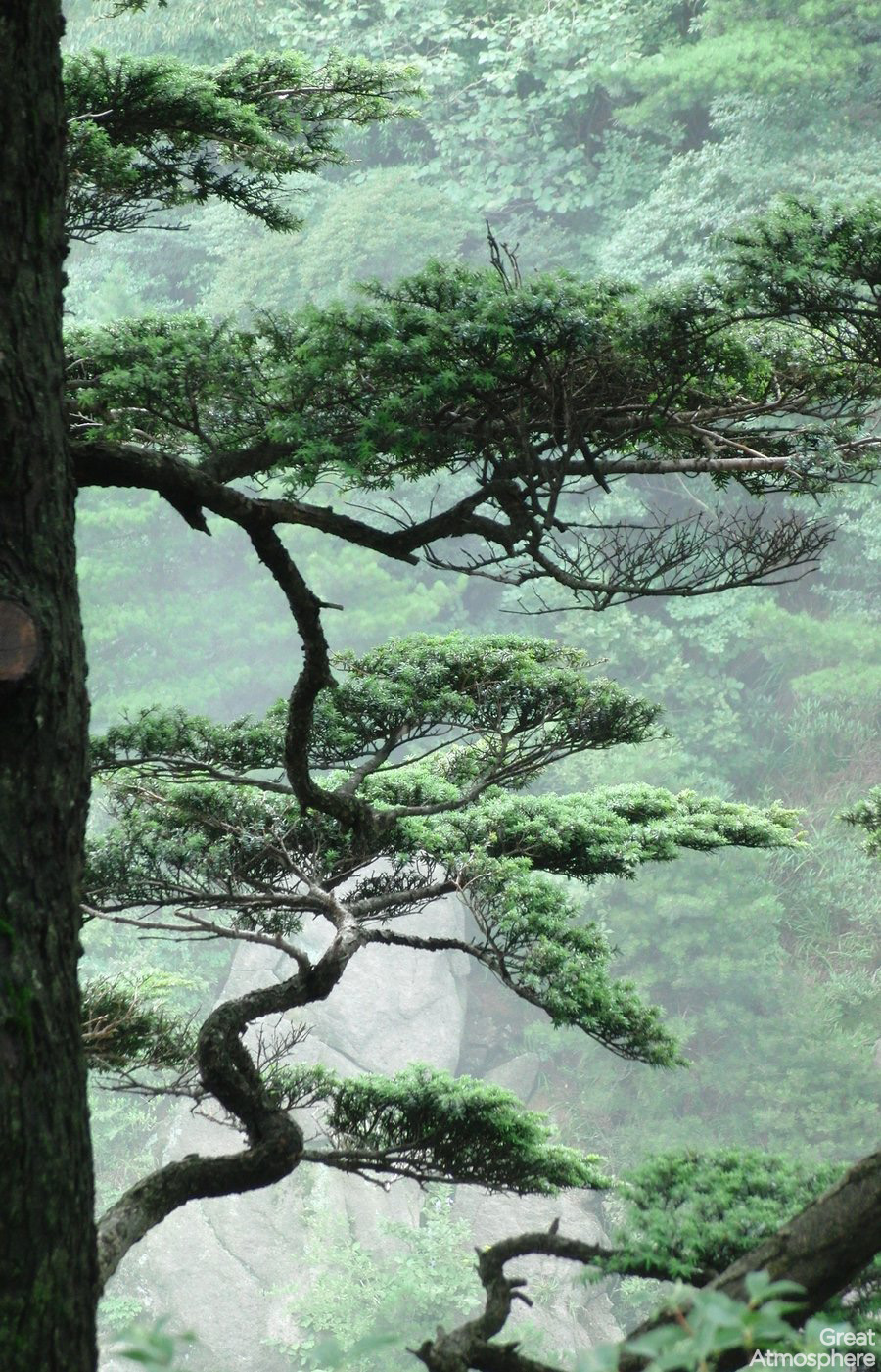 great-atmosphere-trees-china-chill-162-1