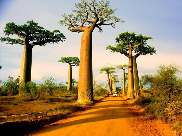 1_The_mall_with_baobab_Madagascar_great_atmoshere