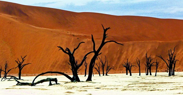 3_Dead_forest_Namibia_great_atmoshere