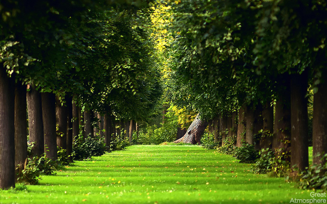 amazing-landscapes-nature-perspective-summer-2013-green-trees-grass-wallpaper-photography