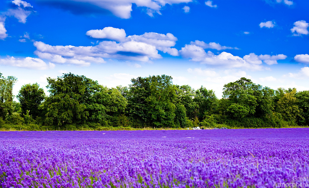 great-atmosphere-amazing_lavender_field_wallpaper-photography-2013-nature-landscape-180-1