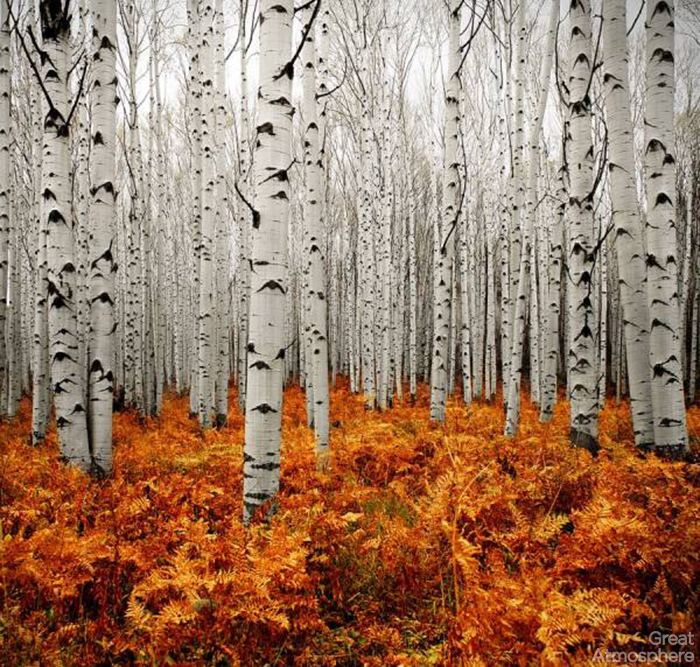 great-atmosphere-aspen-forest-nature-travel-destinations-2013-photography-beautiful-view-179-1