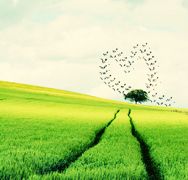 harts-shapes-in nature-15-great-atmosphere-travel