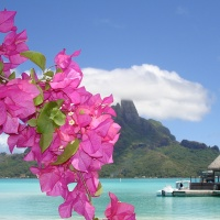Great Atmosphere - Maldive Pink Flowers
