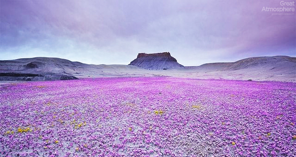 Beautiful Blooming Desert Great Atmosphere
