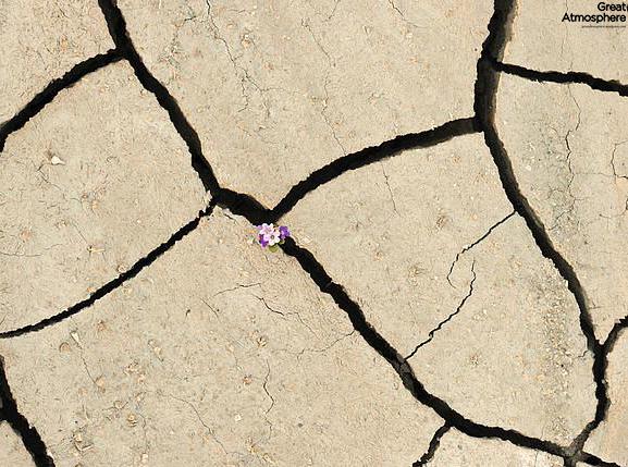 Purple-flowers-desert-flowers-5-great-atmosphere-travel-nature