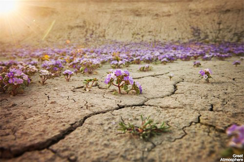 Purple-flowers-desert-flowers-6-great-atmosphere-travel-nature