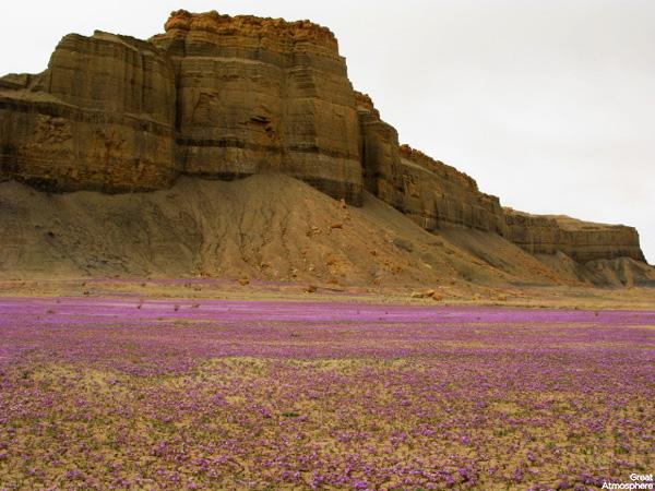 Purple-flowers-desert-flowers-7-great-atmosphere-travel-nature