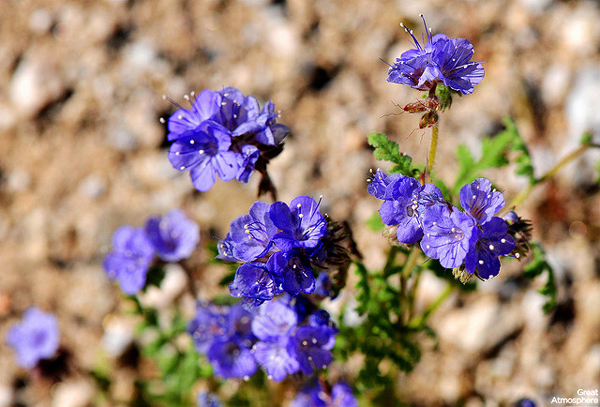 Purple-flowers-desert-flowers-8-great-atmosphere-travel-nature