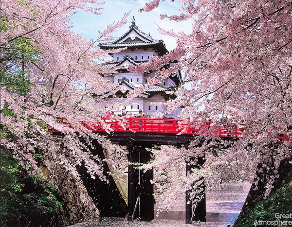 1-hirosaki-Japan-cherry-blossoms-various-cities-world-beautiful-travel-destinations-landscapes