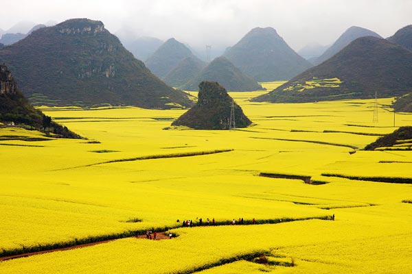 15-Louloudion-fields-Canola-China-nature-landscapes-photography-great-atmosphere