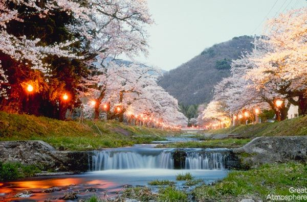 2-Kyoto-Japan-cherry-blossoms-various-cities-world-beautiful-travel-destinations-landscapes