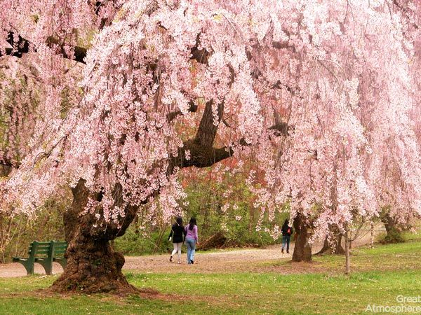 3-brooklyn-USA-cherry-blossoms-various-cities-world-3-beautiful-travel-destinations-landscapes-photography