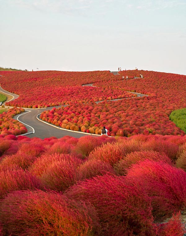 4-Hitachi-Seaside-Park-Japan-great-atmosphere-travel-photography-nature