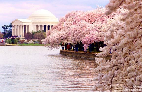4-Washington-DC-USA-cherry-blossoms-various-cities-world-4-beautiful-travel-destinations-landscapes