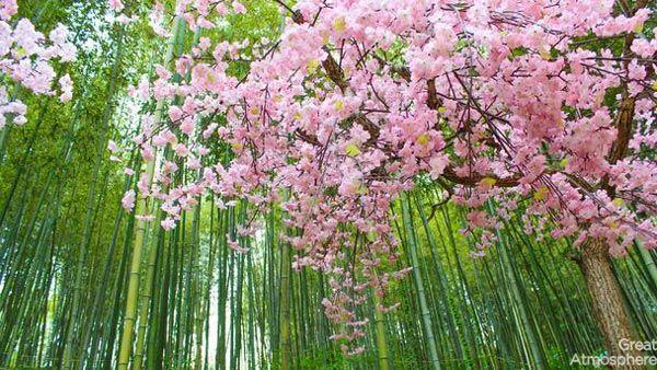 5-Damyang-South Korea-cherry-blossoms-various-cities-world-beautiful-travel-destinations-photography