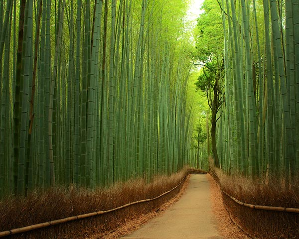 7-Forest-Bamboo-Japan-beautiful-pictures-nature-around-the-planet-great-atmosphere-photography