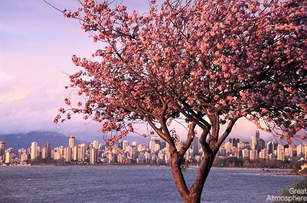 7-Vancouver-Canada-cherry-blossoms-various-cities-world-7-beautiful-travel-destinations-landscapes