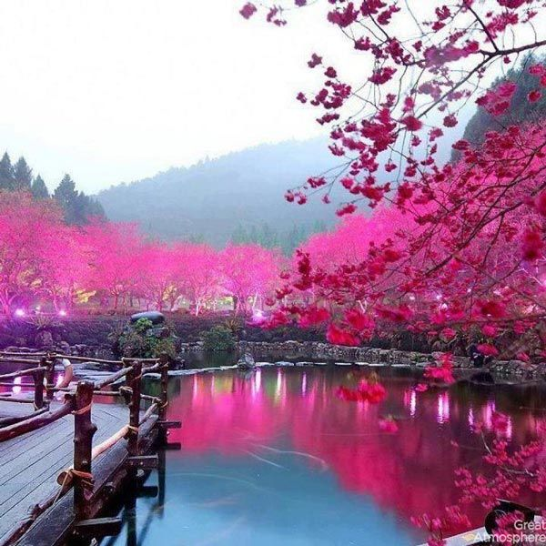 8-Lake Sakura-Japan-cherry-blossoms-various-cities-world-8-beautiful-travel-destinations-landscapes