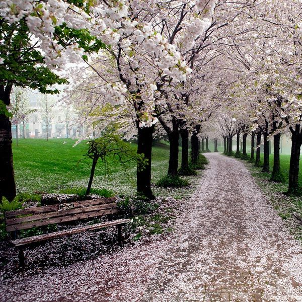 9-Jerte-Valley-Spain-cherry-blossoms-various-cities-world-9-beautiful-travel-destinations-landscapes