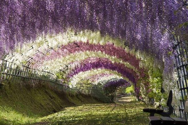 9-Wisteria-Tunnel-Japan-travel-nature-landscapes-photography