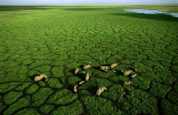 aerial-africa-1-Elephants-in-Lake-Amboseli-Kenya-great-atmosphere-travel-destinations