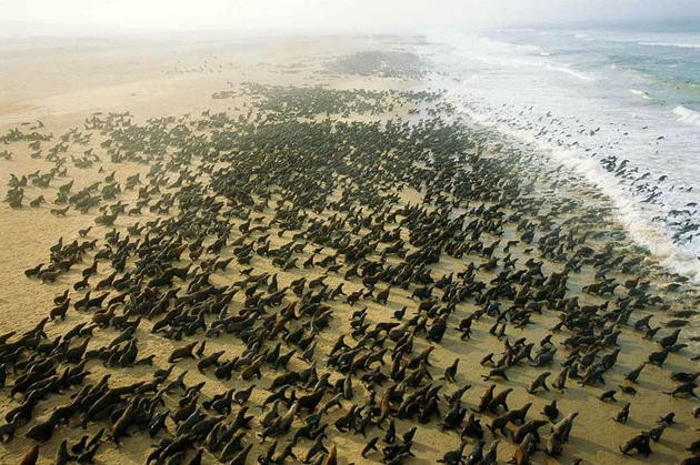 aerial-africa-10-Seals-Cape Fria-Namibia-beautiful-landscape