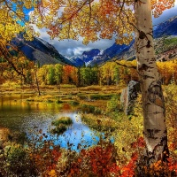 Autumn, Colored trees by the lake, Great Atmosphere