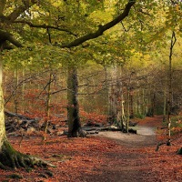 Amazing Autumn, Forest Path