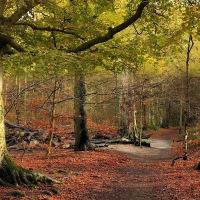 Amazing Autumn, Forest Path