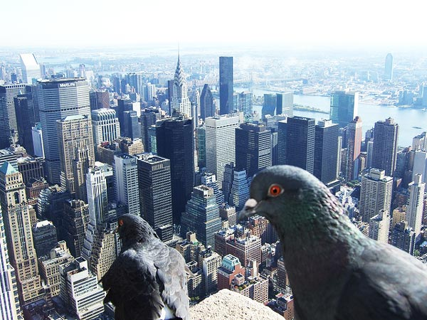 best-views-in-the-world-1-Empire-State-Building