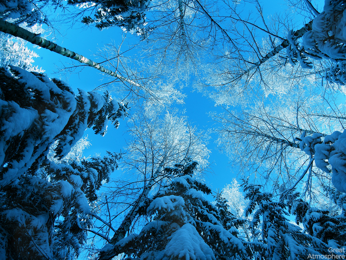 Blue nature winter photography snow trees forest cold wallpaper high