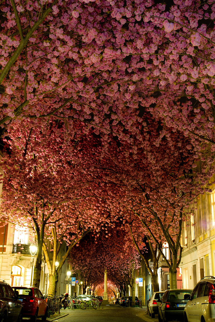 cherry-blossoms-sakura-spring-10-great-atmosphere-greatest-images-2013-beautiful