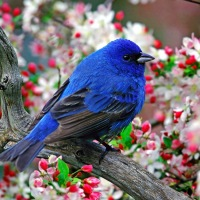 Great Atmosphere - colorful, little, bird