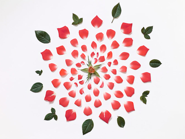 Flowers-Exploded-by-Fong-Qi-Wei-3-amazing-photography-great-atmosphere