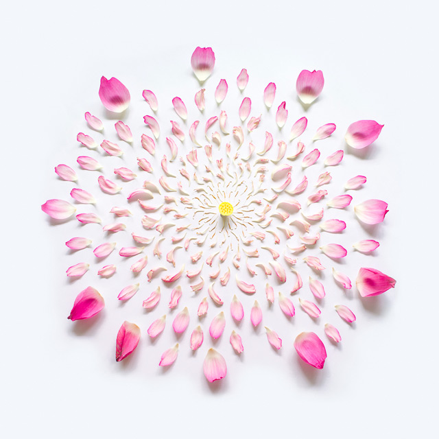 Flowers-Exploded-by-Fong-Qi-Wei-6-flowers-photography-great-atmosphere