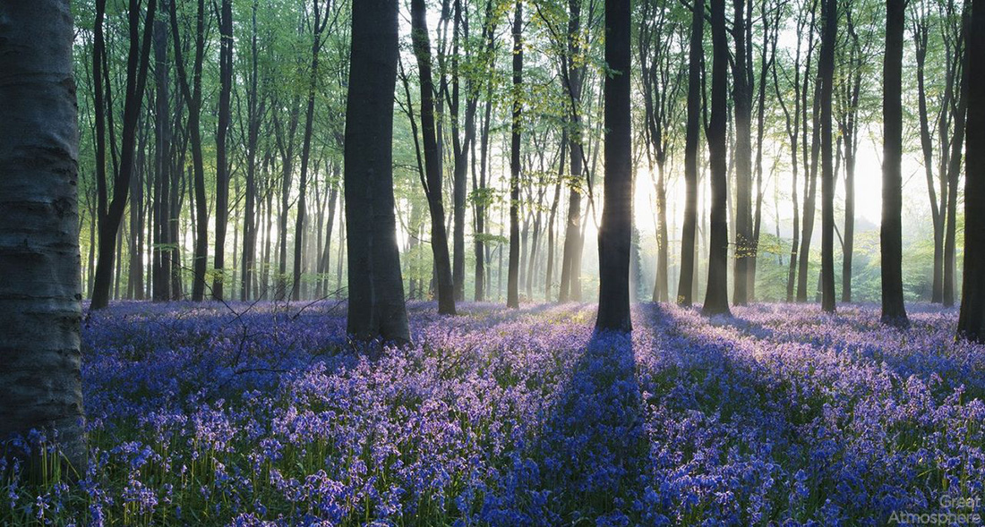 Forest-field-of-flowers-purple-travel-destination-nature-greatatmosphere-1
