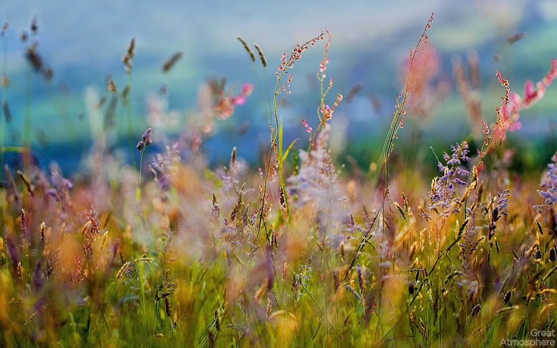 grass_flowers_paints_dim_variety_beautiful_nature_photography_greatatmosphere_landscape-wallpaper-219-1