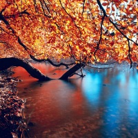 Great Atmosphere,Tree with yellow leaves, beautiful colors