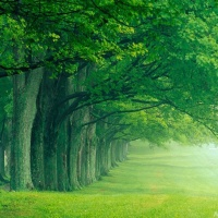 Great Atmosphere - amazing green forest, pattern