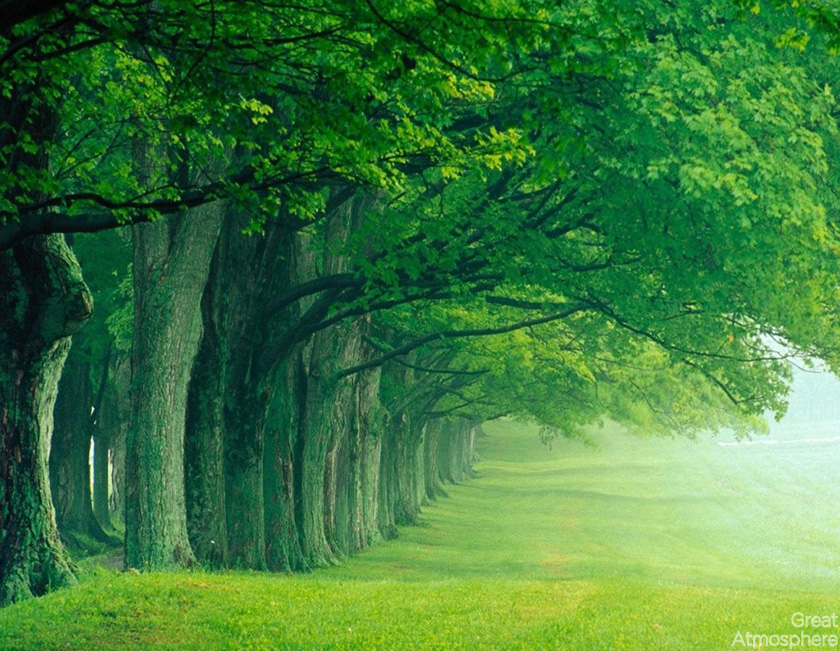 nature-green-landscape-trees-amazing-travel-beautiful-great-atmosphere-198-1