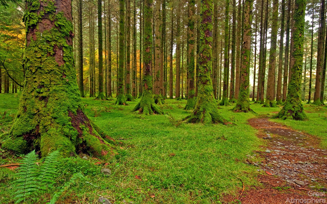 nature_wood_trees_moss_green_track_stone_great_atmosphere_221_1