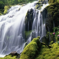 Beautiful Green, Summer, Waterfall, Great Atmosphere