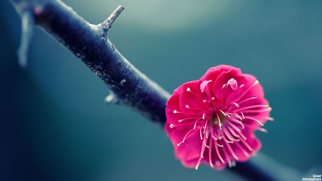 beautiful-pink-one-flower-awesome-nature-photography-great-atmosphere