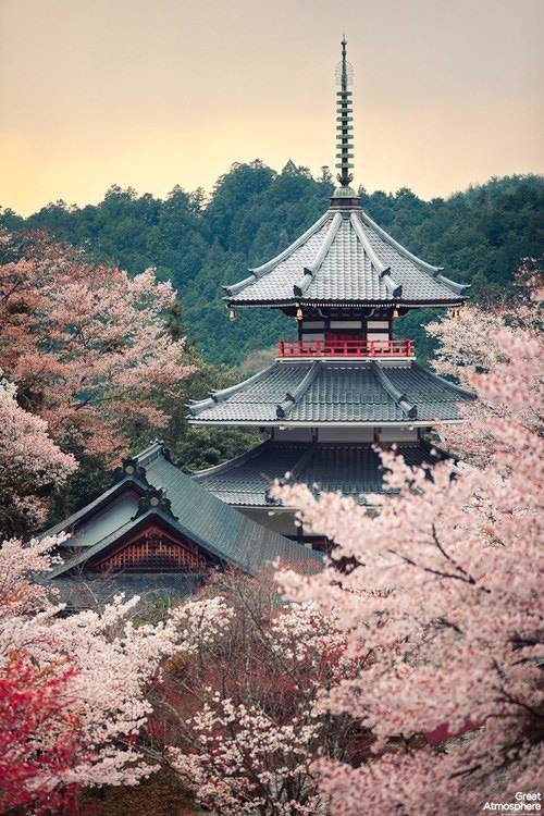 Cherry-tree-full-bloom-Kinpusenji-pagoda-Mount-Yoshino-Nara-Japan-travel-nature-landscapes-photography