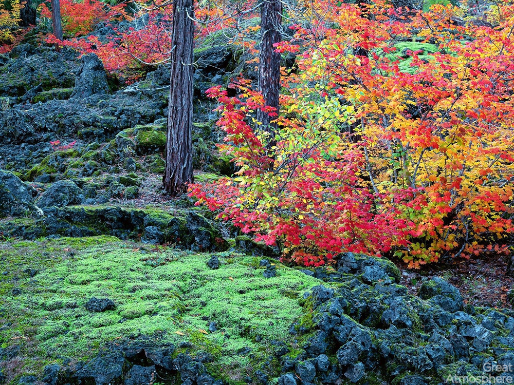 great-atmosphere-autumn-trees-leaves-moss-stones-travel-nature-landscapes-photography